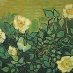 Gogh Van,19,FRA, Wild Roses