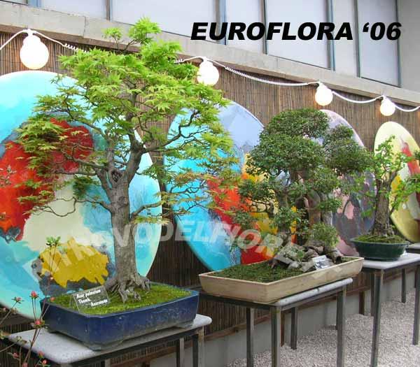 Bonsai da dove partire ritrovo del fiore for Dove comprare bonsai