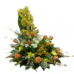 oro_cymbidium_rose_fresie