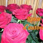 roserosse