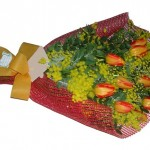 tulipanimimosa