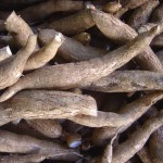 tuberi manihot
