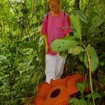 fiore rafflesia